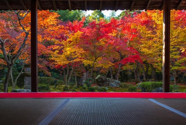 お得な京都こだまスペシャル2日間 延泊及び列車だけの延長可!